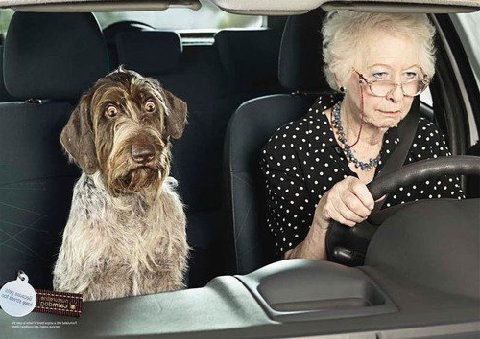 OLD-LADY-AND-DOG-DRIVING