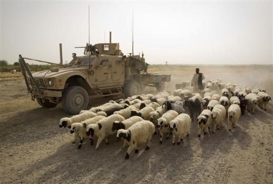 An Afghan shepherd walks with a flock of sheep past a U.S. Marines armored vehicle outside the Camp Gorgak in Helmand province